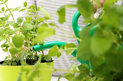 Pflanzendoktor - Hilfe bei Pflanzenschäden
