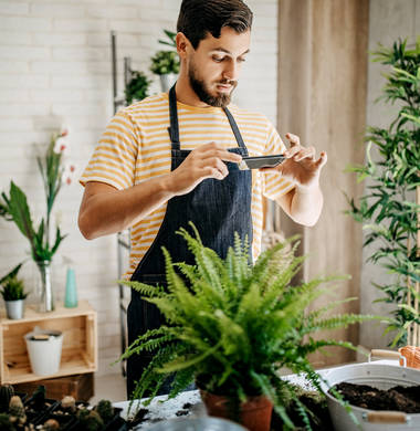 Plantix – App zur Pflanzenbestimmung