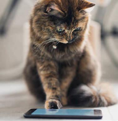 die Entertainment-App für Katzen