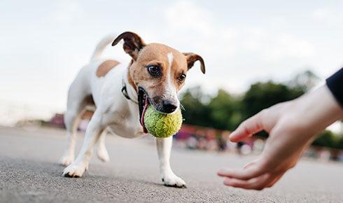 Die Hundetrainer App