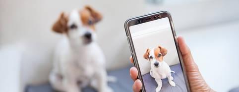 Displaygröße bei Mittelklasse-Handys