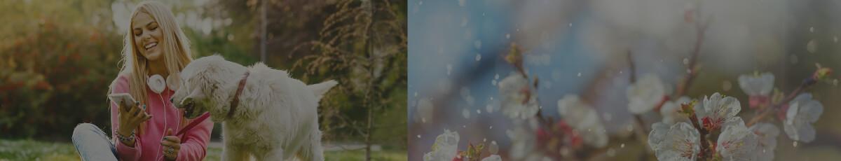 Pollenflug-Apps: Die Top 6 kostenlosen Apps für den Frühling